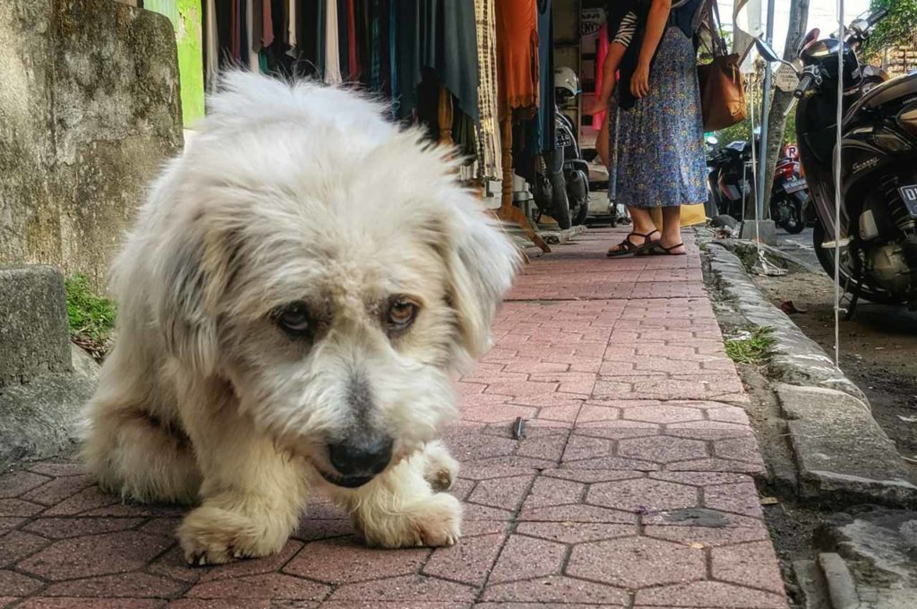 support a stray dog