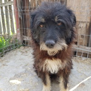 adopt a romanian stray